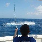 500lbs Blue Marlin!!!