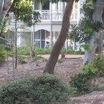 Kangaroos in the garden.