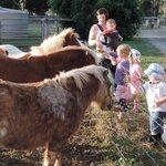 Kids feeding horses