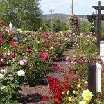 Barona Valley Rose Garden next to parking garage.