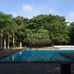 Lush trees near the pool