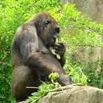 Cincinnati Zoo & Botanical Garden     3400 Vine St, Cincinnati, OH 45220-1399