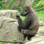 Cincinnati Zoo & Botanical Garden  |  3400 Vine St, Cincinnati, OH 45220-1399