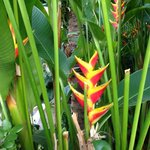 Flowers of Key West - LOVE this heliconia
