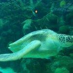 Flip the Turtle