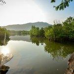 Serene Mangrove Forrest for Kayak