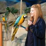 The Bird Show (featuring Scruffy the Parrot)