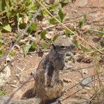 Les P'tits écureuils