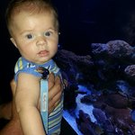 Our 6 month old checks out the marine life