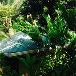 bungalow dans la végétation