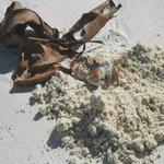 Granchio sulla  spiaggia di Praslin