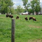 Readington River Buffalo Farm