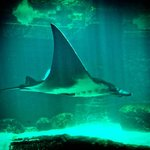 The Manta Ray is a must-see