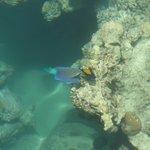 Pesce pappagallo e pesce chirugdo fotografati dal pontile