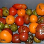 Heirloom Organic Tomatoes from our garden