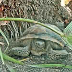 We also spotted a desert tortoise on the property.
