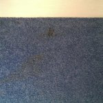 Carpet stained