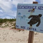 Turtle nesting areas marked off