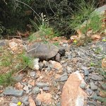 Tortoise spotting, 5 mins from the hotel