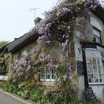 Wisteria covered cottage frontage