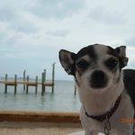 Lola on the beach