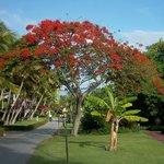 Beautiful & lush grounds