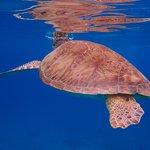 Sea Turtle at Turtle Cove