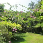 Garden in challe