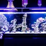 Cardomon Green's exquisite fish tank
