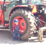 The toddler boys seem to spend most of the time looking at the tractors.