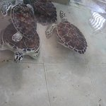Turtles!!!!