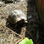 Schildkröte auf dem Gelände