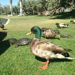 Tame Ducks and Turtles