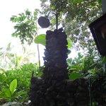 Luana Spa Retreat Foto