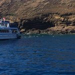 Maui Snorkel Trip