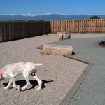 The New Dog Excercise Area with a Fantasic View!