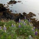 Wildflower Meadow Trail Overlook
