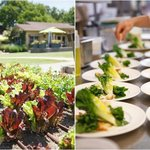 Photos from our wedding of the gardens and the salads we were served at lunch. Photos by Jen Phi