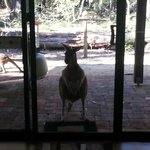 The roo at the door