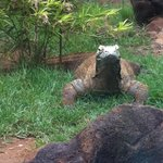 not so lovely!  Komodo Dragon