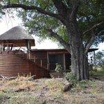 Our safari suite