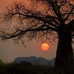 Splendid Baobab sunset