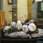 Selected Tuna loaded  and waiting to be sent off to restaurants etc.