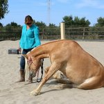 Zara und ihr Pferd