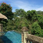 Lush tropical jungle views.