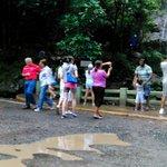La Coca at The Rain  Forest