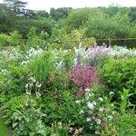 Flower and srub garden