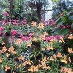 Orchideen im Berggarten