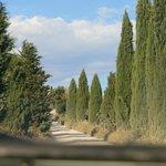 Viale di cipressi strada per Leonina