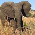first elephant we saw